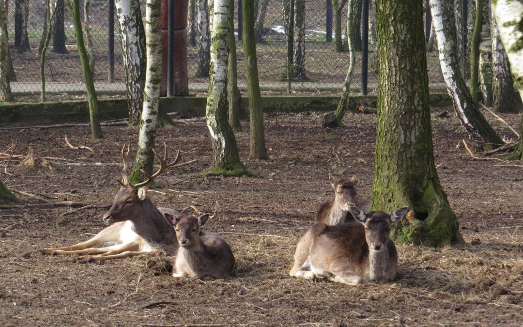 Gdzie na spacer z dzieckiem? – Rogów Mini ZOO – Park Leśny u Kaczyny
