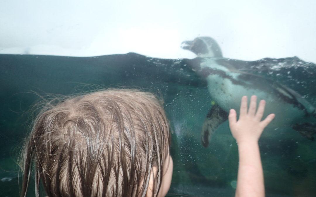 Spreewelten Aquapark w Niemczech- popływaj w obecności pingwinów.