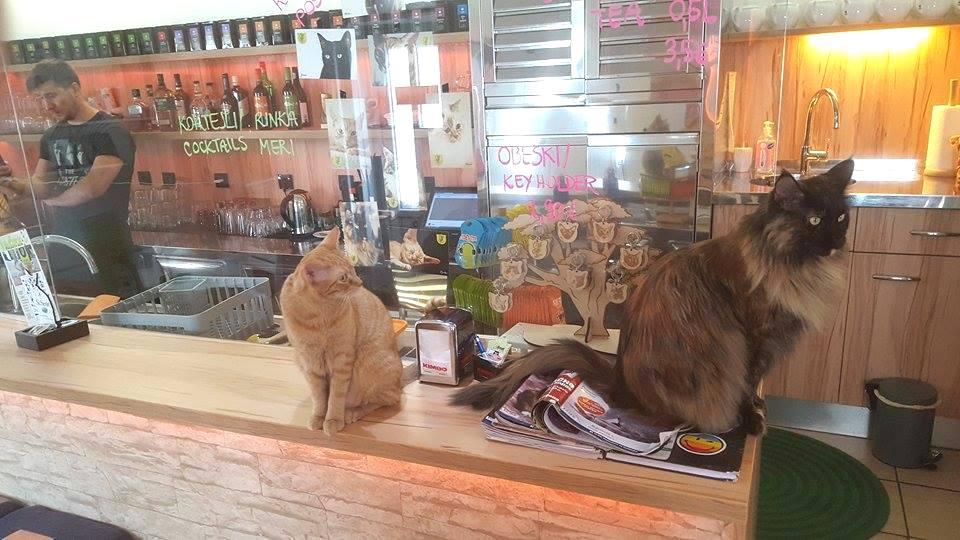 Cat Caffe Ljubljana w Słowenii