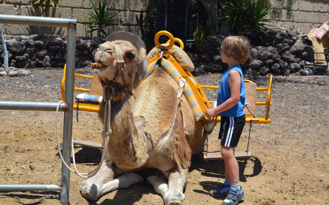 Camel Park Teneryfa