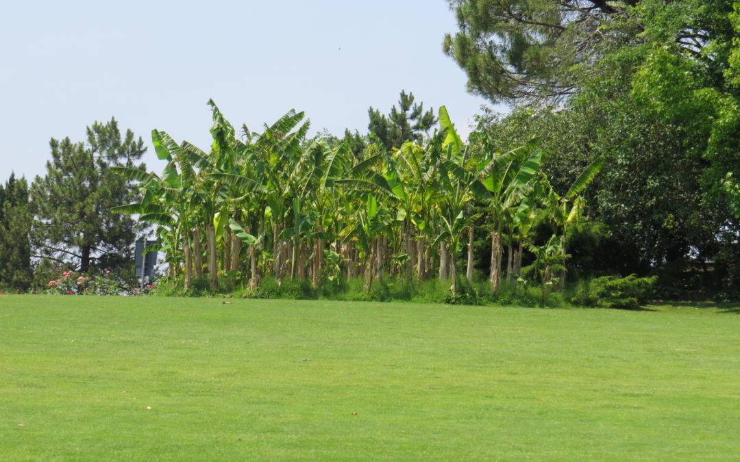 Parco Sigurta Giardino Italy – włoskie ogrody umilą czas dla rodziny